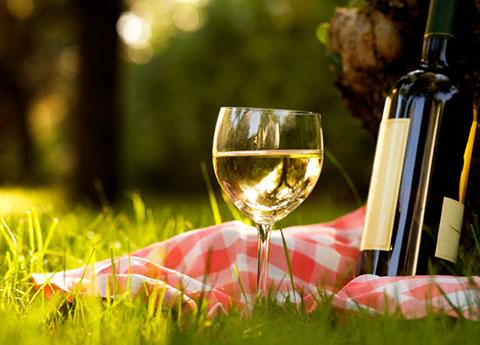 Wine Tours & Tastings at Santa Rosa
